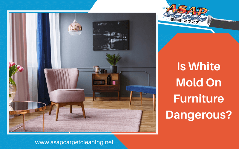 Is White Mold On Furniture Dangerous?